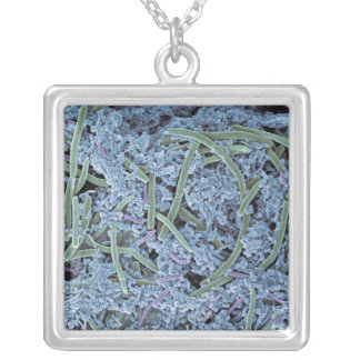 Dental plaque, coloured scanning electron silver plated necklace