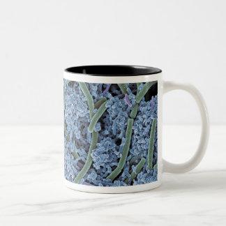 Dental plaque, coloured scanning electron Two-Tone coffee mug