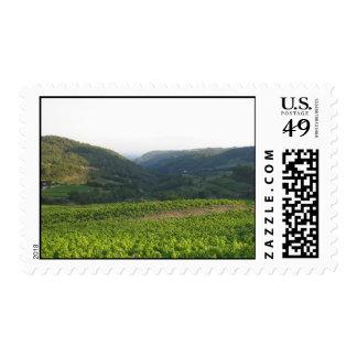 Dentelles de Montmirail Stamp
