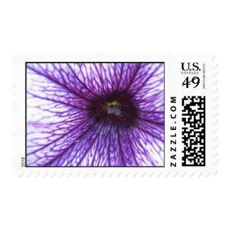 dentro de la flor envio