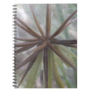 Dentro de un cuaderno del diente de león