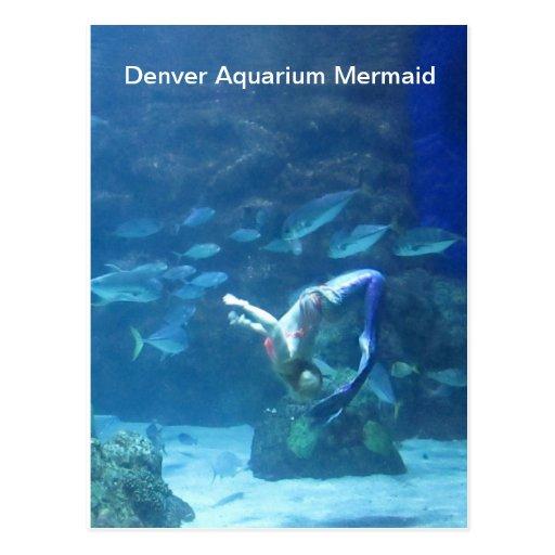 denver_aquarium_mermaid_postcard-rbe6739