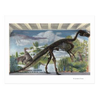 Denver, Colorado - museo de la historia natural Tarjetas Postales