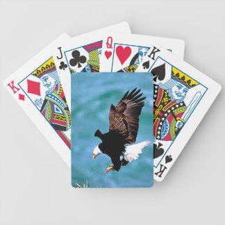 Depredador sólido del pájaro del águila calva del