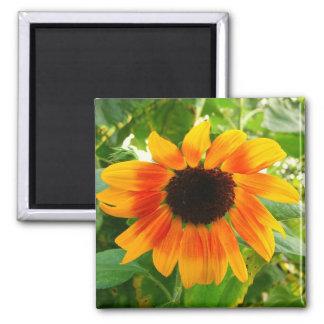 Depressed Sunflower 2 Inch Square Magnet