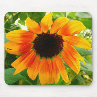 Depressed Sunflower Mouse Pad
