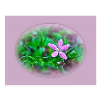 Deptford Pink Wildflower Postcard