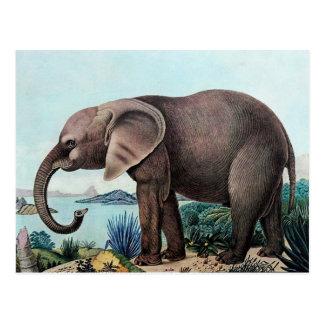 Der Afrikanische Elefant or The African Elephant Postcard