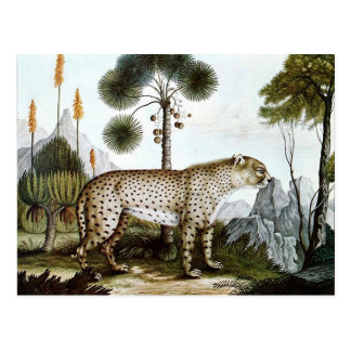 Der Gepard or The Cheetah (1886) Postcard