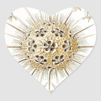 Der Natur de PHAEODARIA Ernst Haeckel Kunstformen Calcomania De Corazon