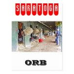 """Derby winner """"Orb"""" as a 2 yr. old Postcard"""