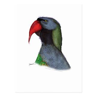 derbyan parakeet, tony fernandes postcard