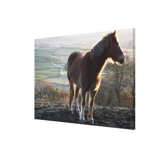Derbyshire, Inglaterra Lienzo Envuelto Para Galerias
