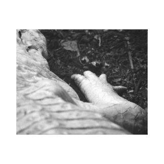 derecho del cocodrilo del albino blanco y negro impresión en lona