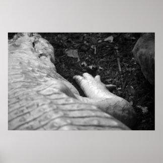 derecho del cocodrilo del albino blanco y negro impresiones