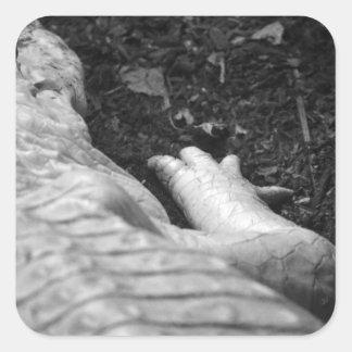 derecho del cocodrilo del albino blanco y negro calcomanías cuadradases