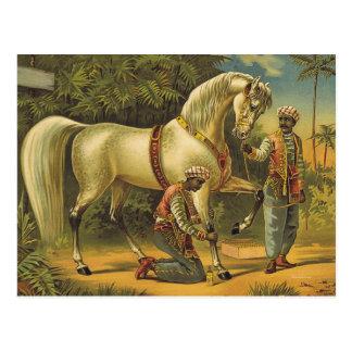 Derechos del caballo de la CAMISETA Tarjetas Postales