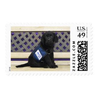 Derek stamp