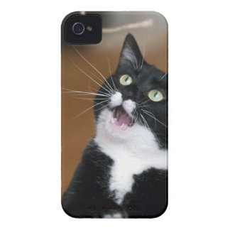 Derpy Cat Making a Silly Face iPhone 4 Case-Mate Case