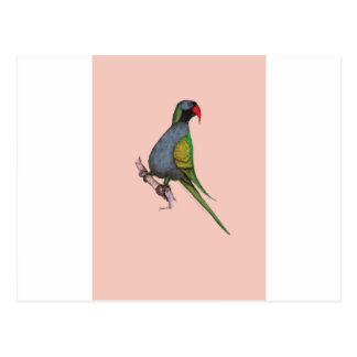 deryban parakeet, tony fernandes postcard