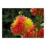 DES Plantes-6 de Jardin Felicitacion