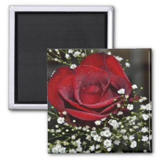 desafío de 365flowers RedGage Iman