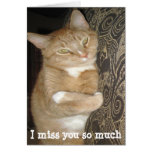 Desaparecidos divertidos usted abrazo del gato de  tarjetón