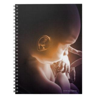 Desarrollo embrionario 5 notebook