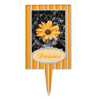 Desaturated Spring Flash African Daisy Photograph Cake Picks
