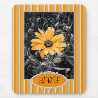 Desaturated Spring Flash African Daisy Photograph Mouse Pad