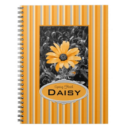 Desaturated Spring Flash African Daisy Photograph Journals