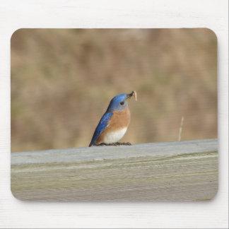 Desayuno azul del pájaro tapetes de ratones