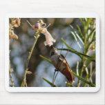 Desayuno del colibrí tapetes de raton