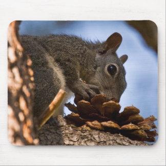 Desayuno del cono del pino alfombrilla de raton