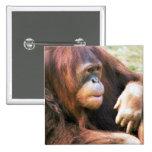 Descanso del orangután pin cuadrado