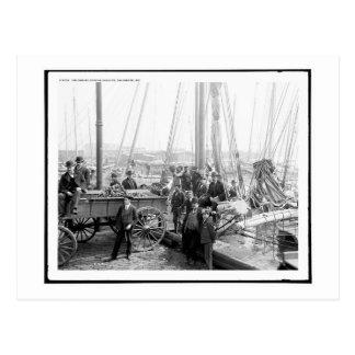 Descarga de la ostra Luggers, Baltimore, vintage Postales