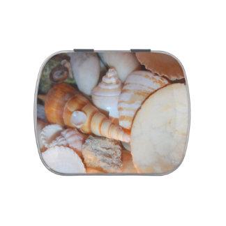 descasca imagen de la Florida muchos seashells Jarrones De Caramelos