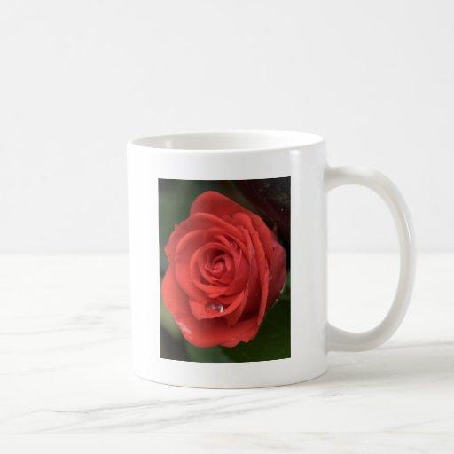 Descenso color de rosa tazas de café