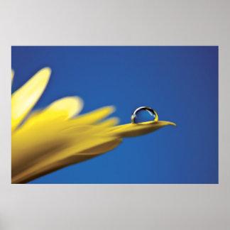 Descenso del agua en la flor posters