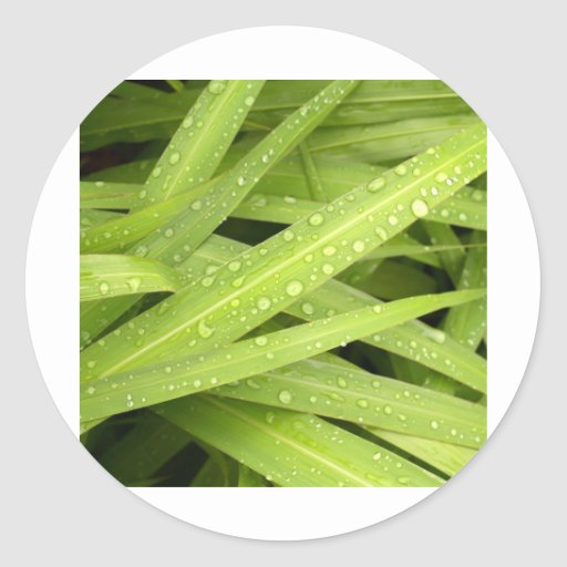 descenso del agua en las hojas etiqueta redonda