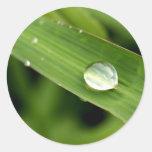 descenso del agua en las hojas pegatina redonda