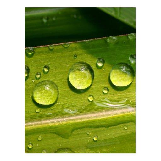 descenso del agua en las hojas postal
