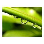 descenso del agua en las hojas postales