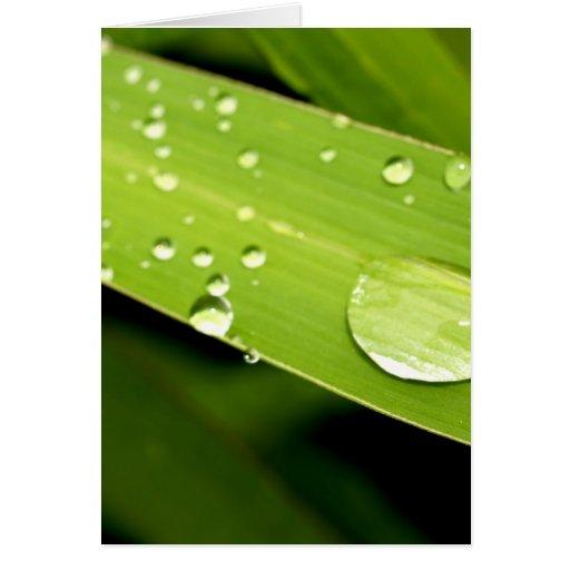 descenso del agua en las hojas tarjeta de felicitación