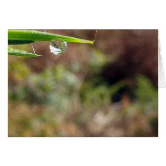 Descenso macro del agua en Gorse Tarjeta De Felicitación
