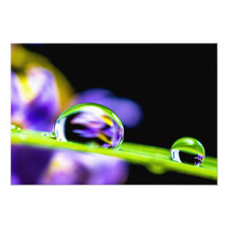 Descenso macro del agua en la flor de la púrpura cojinete