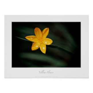 Descensos amarillos de la flor y de la lluvia posters