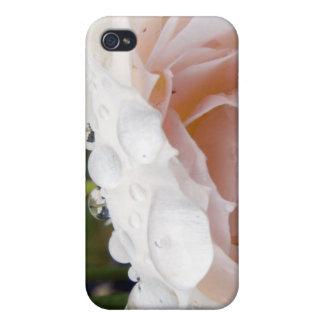 Descensos cristalinos en color de rosa rosado iPhone 4 protectores