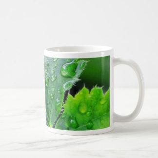 Descensos de las gotitas de agua del rocío tazas de café
