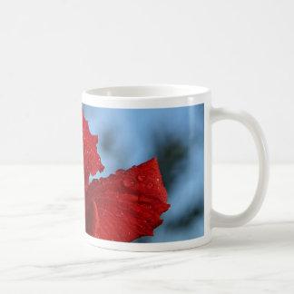 Descensos de rocío del hibisco tazas de café